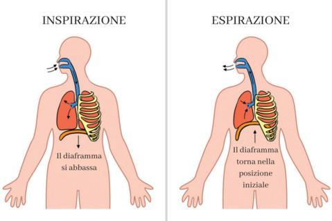 dolore al diaframma respirazione
